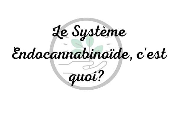 systeme endocannabinoïde cbd sante effet bien etre soin