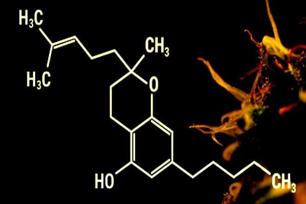 cbc cbd cannabinoide puissant thc