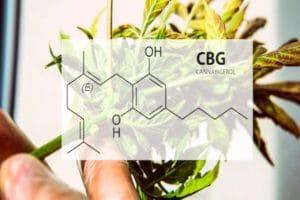 cbg cannbigerol cbd puissant bien etre relaxant anticancer