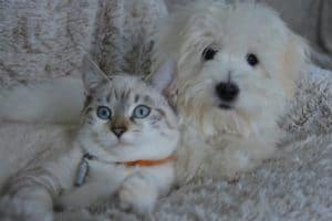 huile cbd pour animal chien et chat